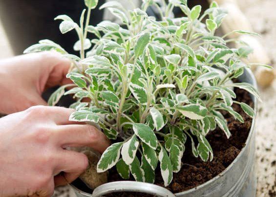 Garten Bepflanzung